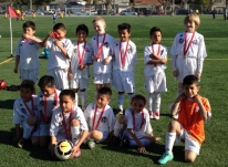 Santa Rosa Black Oaks U8 Boys Soccer Team