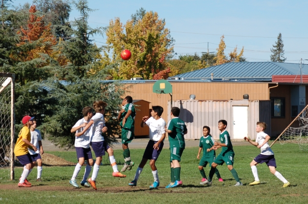 kepala dan pohon ek hitam muda sepakbola-NorCal-santa-rosa.jpg